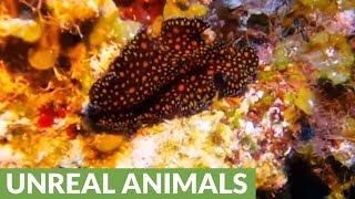 Strikingly beautiful & strange creature spotted 100 feet beneath the waves
