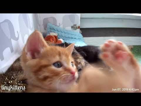 Captain Barracuda's Kitten Superpower Is Cuteness - TinyKittens.com