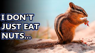 Chipmunk facts: pack your cheeks with these facts | Animal Fact Files YouTube Videos