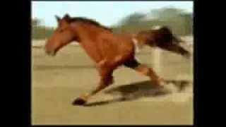 Лошадь наркоман (+18)