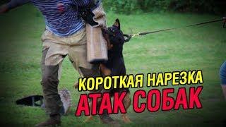 Короткая нарезка атак собак