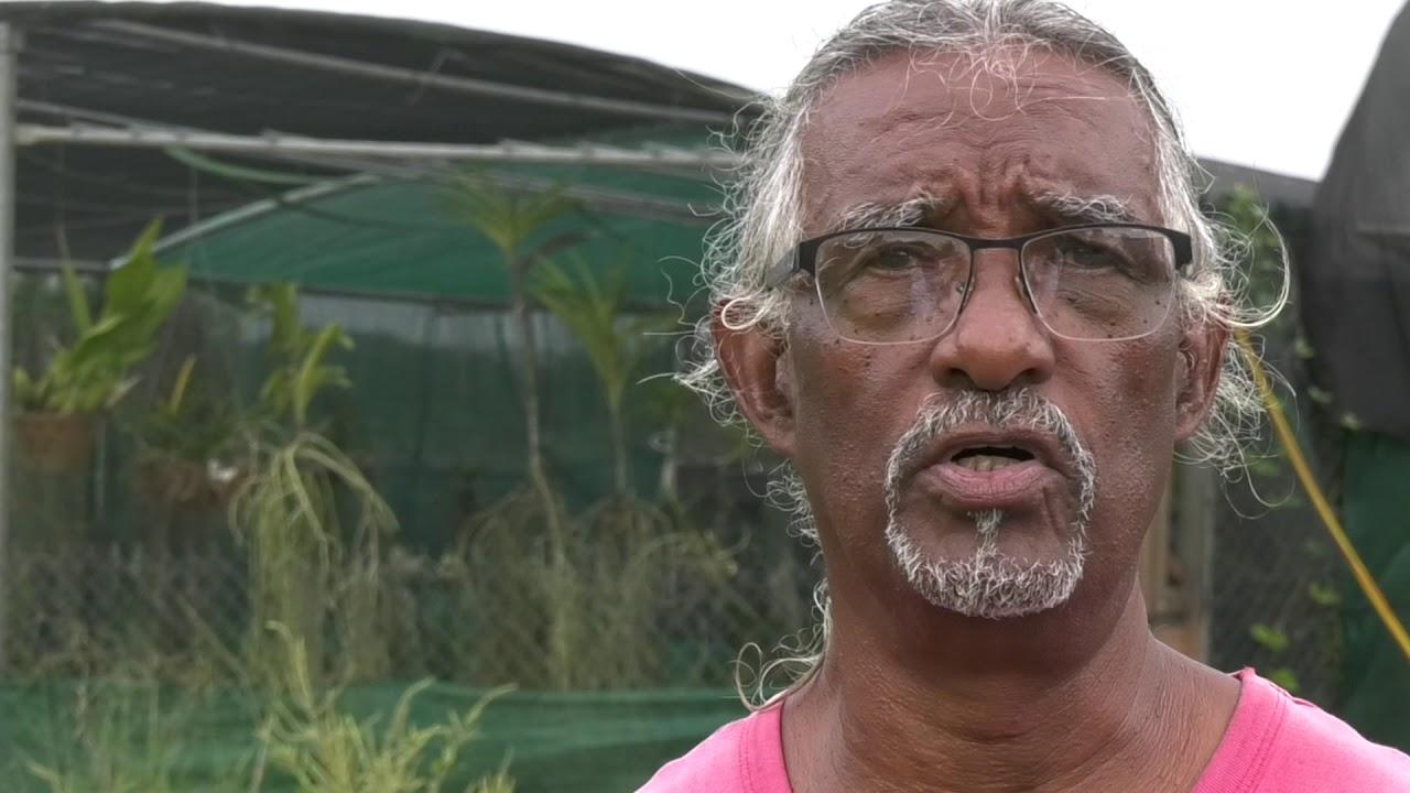 Pluies et agriculture ne font pas bon ménage à la Guadeloupe!