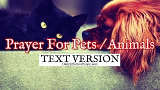 Prayer For Pets / Animals (Text Version - No Sound)