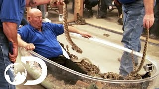 Taking A Bath With Over 120 DEADLY Rattlesnakes!   Rattlesnake Republic