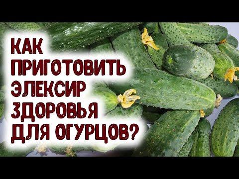 Вопрос: Сколько корней огурцов вы посадили в 2020 году и почему именно столько?