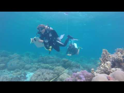 Understanding an Underwater Survey