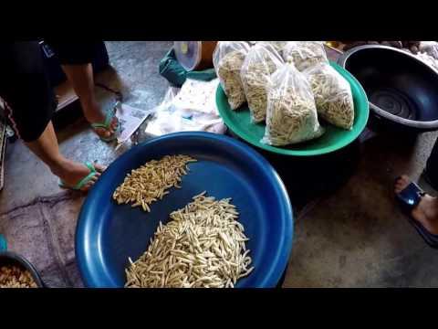 Bamboo Worms!!! Iu mienh Shopping in Mae Sai Thailand Bamboo lava for dinner? Iu Mienh Village Yao