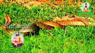 paambaatti siddhar secrets in tamil | பாம்பாட்டி சித்தர் ரகசியம் | sithargal | சித்தர்கள்
