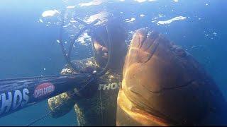 Büyük Orfoz 20 Kg - Big Grouper 20 Kg