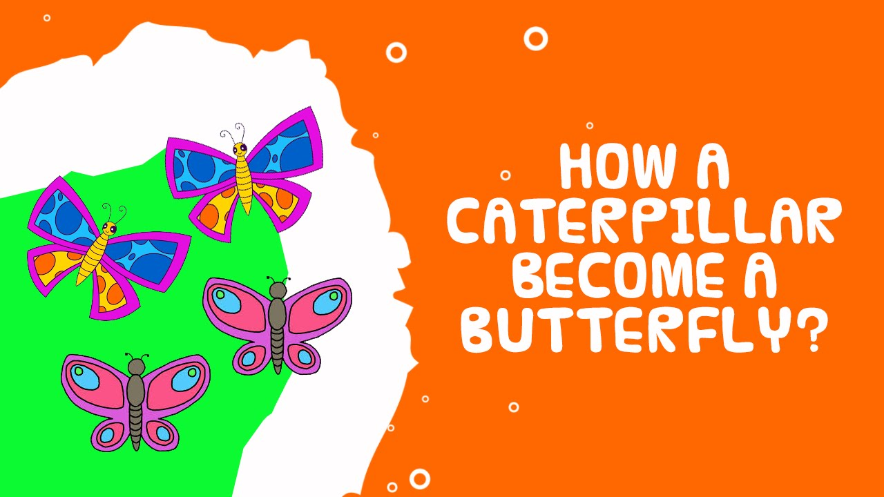 how caterpillars turn into butterflies science facts for kids