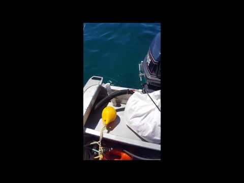 A Great White Shark Circles a Boater in New Zealand