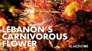 Lebanon's Carnivorous Flower