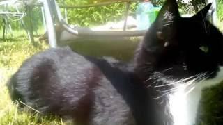 сладкий сон кошки прервал выстрел. сторожевой охотничий кот готов к охоте в летний отпуск на даче