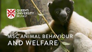 MSc Animal Behaviour and Welfare