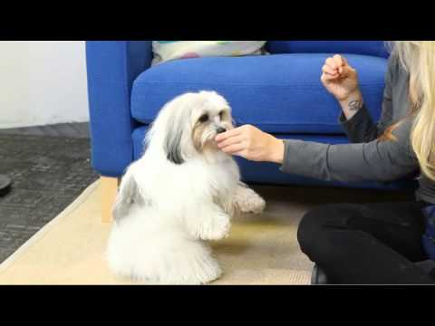 Teach Your Dog to Beg or 'Sit Pretty'