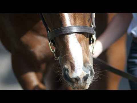 2015 Gold Coast National Yearling Sale Day 1