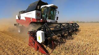 Уборка урожая 2021 Пшеница в рисовых чеках