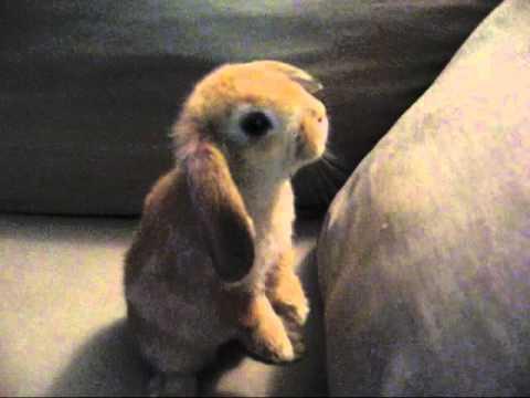 The Very Cutest Bunny on Earth: Mailon