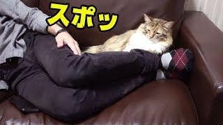 猫と一緒に寝る方法発見したw