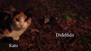 Mi Trovis Didelfidon!