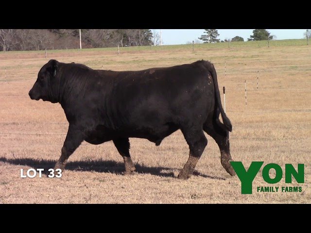 Yon Family Farms Lot 33