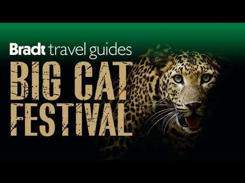 bradt's-big-cat-festival