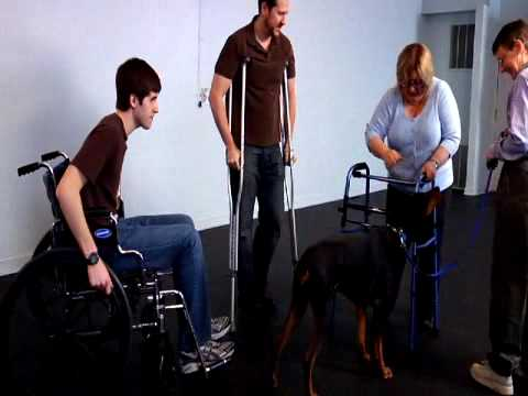 Canine Therapy Corps Certification Test - Big Dog