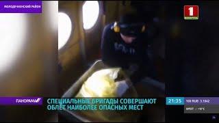 Авиавакцинацию диких животных против бешенства проводят в Беларуси. Панорама