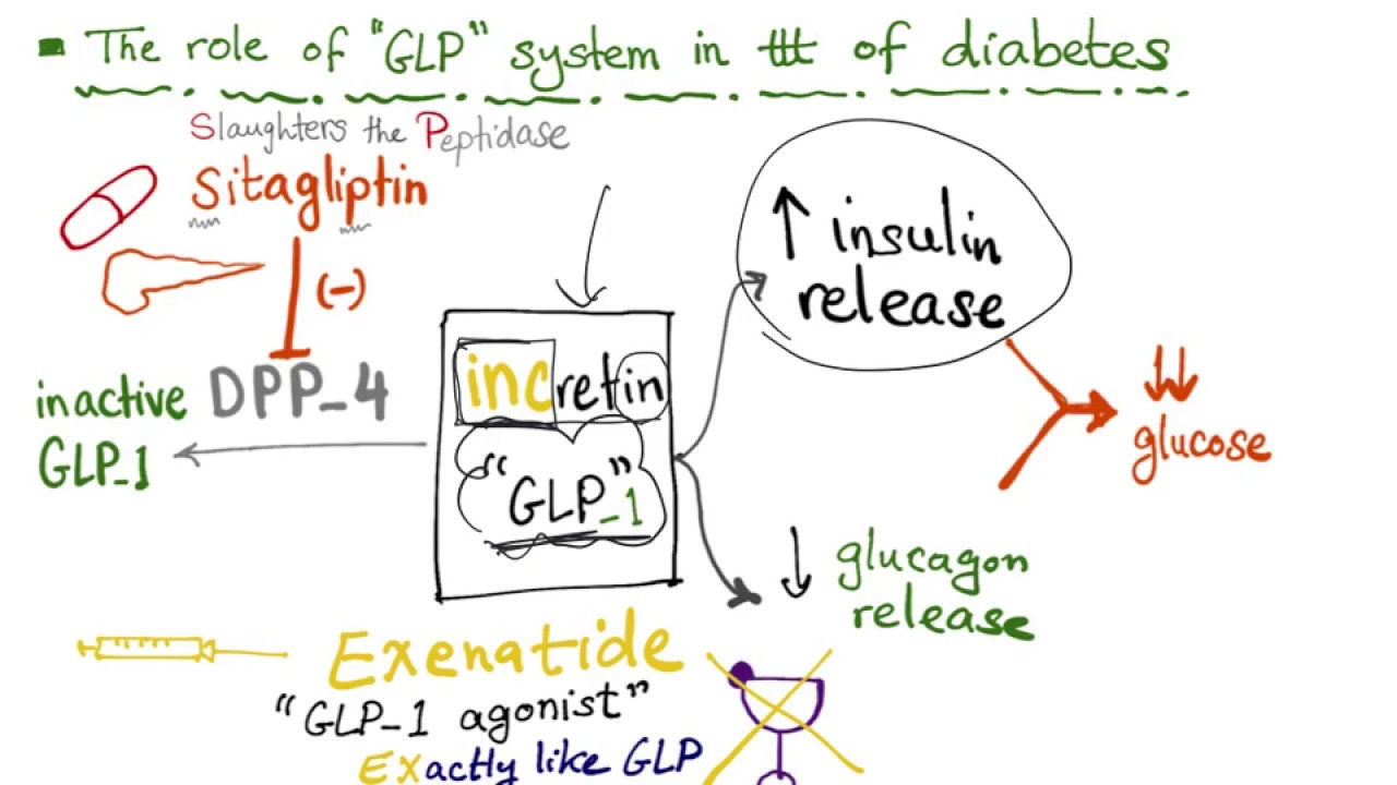 Glucagon-like Peptide (GLP-1) and the treatment of diabetes - YouTube