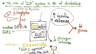 Glucagon-like Peptide (GLP-1) and the treatment of diabetes
