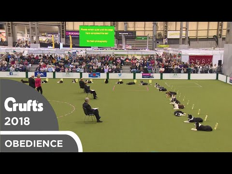 Obedience - Bitch Championship - Stays | Crufts 2018