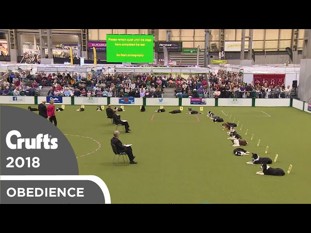 Obedience - Bitch Championship - Stays | Crufts 2018