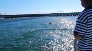 Delphine auf Kuba ( Dolphin ride Cuba )