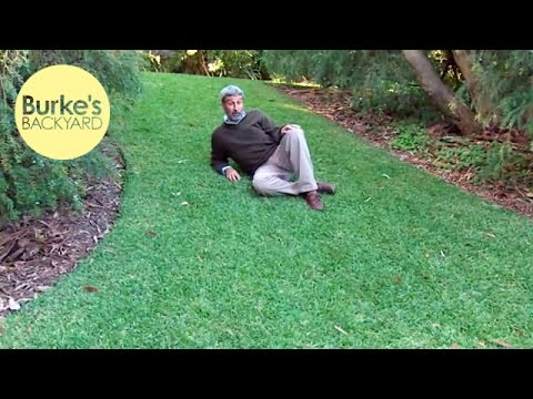 Burke's Backyard, Old Husband's Tales - Low maintenance lawn