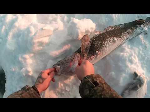 это не диалоги о рыбалке ловля налима на блесну