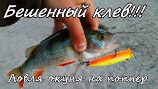 Жор окуня! Ловля на поппер. Рыбалка на Оби на спаде воды.