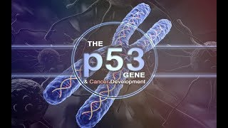 Белок р53 - опухолевый супрессор (антионкоген, защита)