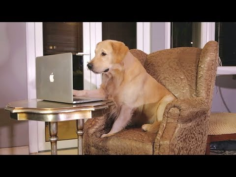 """MUST WATCH!! SMART DOG TRYING TO FIND A DATE!"" 