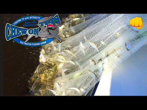 Net Fishing  Cast Netting 2000 Bait Snook Fishing and a big Mystery Fish in Florida fishing video