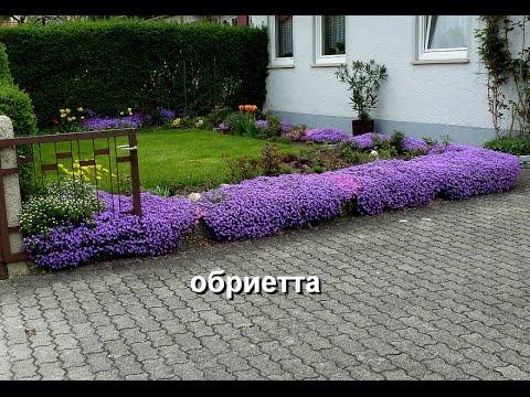 видео: Знакомимся - почвопокровные растения, их название, фото. Часть 2