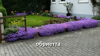 видео Низкорослые цветы для клумбы цветущие все лето
