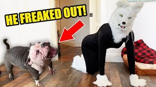 I Pranked My Dogs With A Halloween Wolf Mask! *Hilarious Reaction*