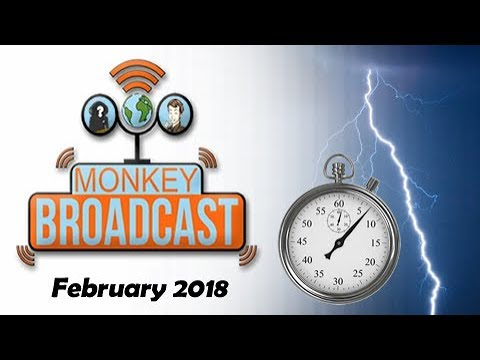 Monkey Broadcast February '18 - A Fistful of QuickFire Reviews