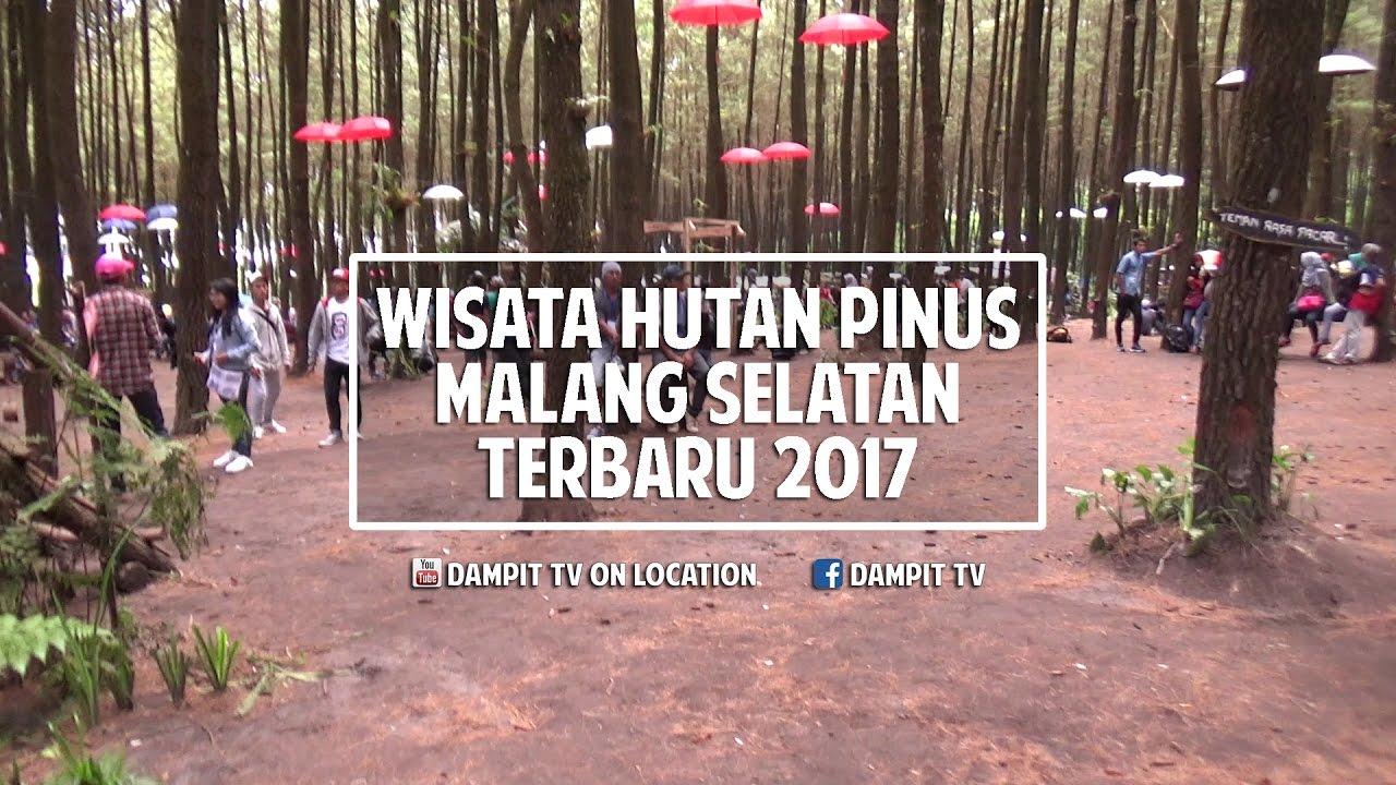 Wisata Hutan Pinus Malang Selatan Terbaru 30 April 2017 Gak