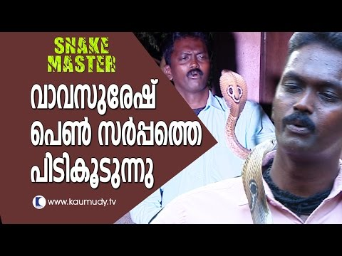 Wow ! Vava Suresh Catching Female Cobras & Hump Nosed Pit Viper | Snake Master