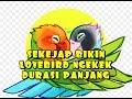 Masteran Lovebird Bikin Lb Lain Ikut Nyaut Ngekek Panjang  Mp3 - Mp4 Download