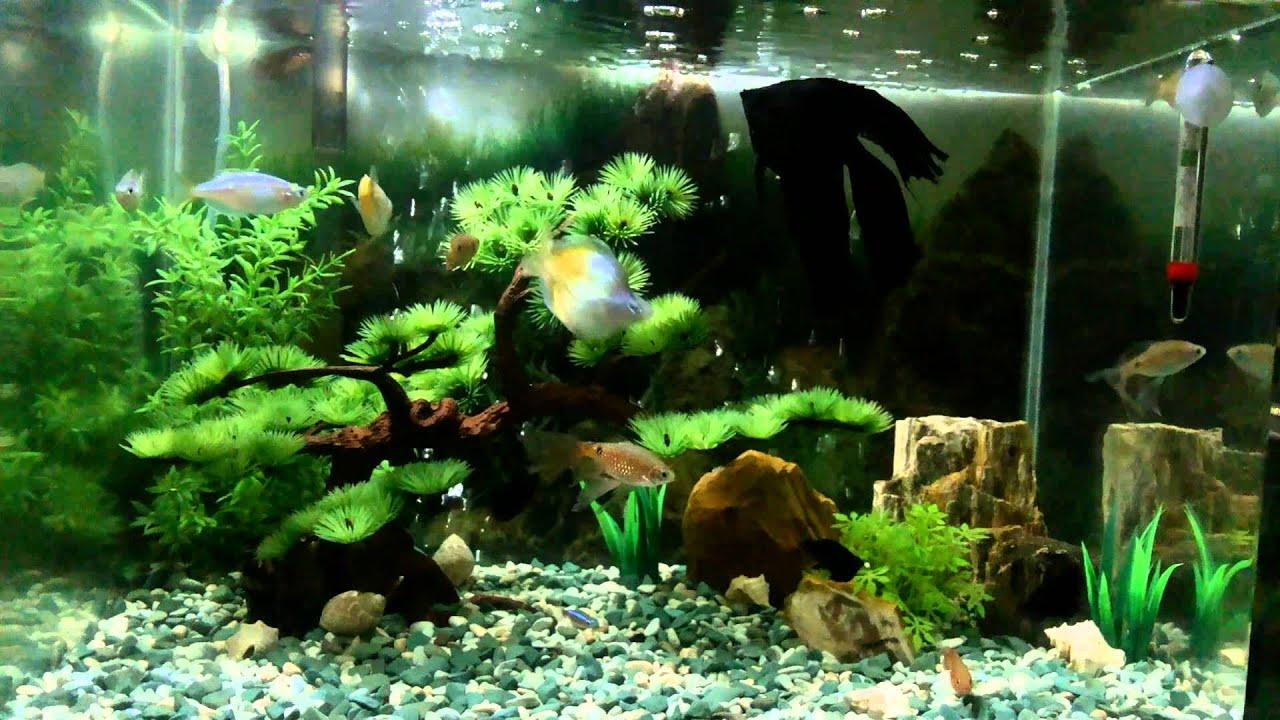 Aquascape tanaman plastik YouTube