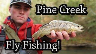 Pine Creek Fly Fishing! Pennsylvania 2018