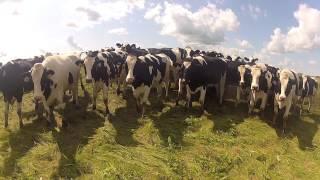 Milking 2012 - Dairy Farming in Canada