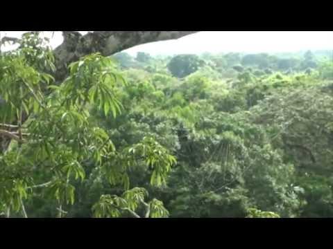 South America 2008 Amazon Jungle Part Three